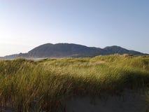 Hierba iluminada por el sol de la playa Imágenes de archivo libres de regalías