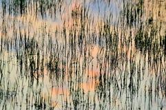 Hierba inundada Imagenes de archivo