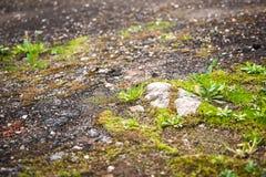 Hierba joven que crece en el asfalto viejo Imágenes de archivo libres de regalías