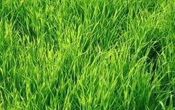 Hierba jugosa verde como fondo Fotos de archivo