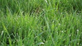 Hierba larga de la primavera hecha excursionismo DOF bajo, fondo borroso, cantidad baja FHD del contraste metrajes