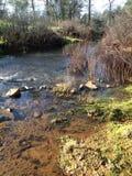 Hierba larga en agua Foto de archivo libre de regalías