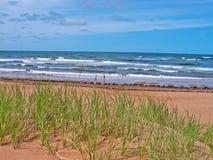 Hierba lateral del océano Foto de archivo libre de regalías