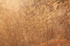 Hierba marrón seca de la playa Foto de archivo