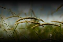 Hierba mojada Imagen de archivo libre de regalías