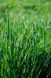Hierba mojada con el campo borroso en fondo Foto de archivo libre de regalías