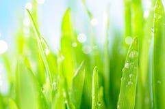 Hierba mojada fresca en rayos del sol Foto de archivo