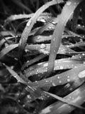 Hierba mojada mono Foto de archivo libre de regalías