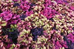 Hierba multicolora en una cama Imagenes de archivo