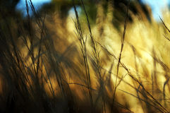 Hierba nativa del verano Foto de archivo libre de regalías