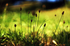 Hierba nativa del verano Fotografía de archivo