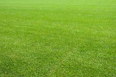 Hierba natural fresca del césped Imagen de archivo libre de regalías