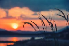 hierba o flor hermosa en una puesta del sol en estilo retro Foto de archivo