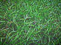 hierba plástica Fotos de archivo libres de regalías