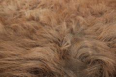 Hierba que parece un pelo Fotografía de archivo