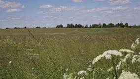 Hierba que sopla del viento en campo del heno Sun que brilla en el paisaje rural, tierras de cultivo almacen de video
