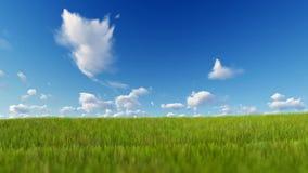 Hierba que sopla sobre el cielo azul