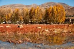Hierba roja en Szechwan Imagen de archivo libre de regalías