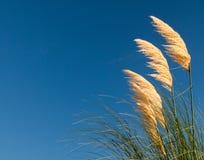 Hierba salvaje de la playa Fotografía de archivo libre de regalías