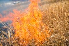 Hierba salvaje en el fuego foto de archivo