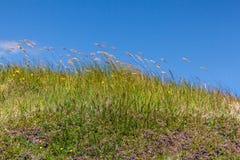 Hierba salvaje en el viento Harris, islas occidentales, Escocia fotografía de archivo