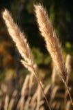 Hierba salvaje en la charca Fotos de archivo libres de regalías