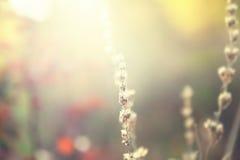 Hierba salvaje en un campo en la puesta del sol Foto de archivo libre de regalías