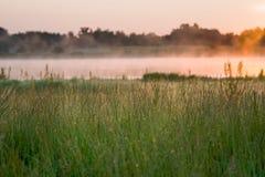 Hierba salvaje por un pantano Imagen de archivo libre de regalías
