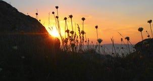 Hierba salvaje que agita en la roca de Front Of Ocean Sunset With en primero plano almacen de video