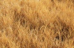 Hierba seca Fotografía de archivo libre de regalías