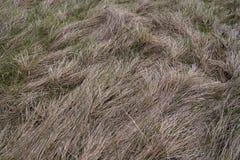 Hierba seca Foto de archivo libre de regalías