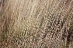 Hierba seca Fotografía de archivo