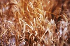 Hierba seca Foto de archivo