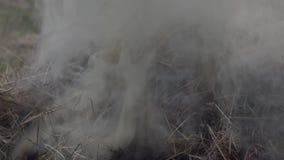 Hierba seca ardiendo en un fuego en el jardín almacen de metraje de vídeo