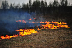Hierba seca ardiente en el campo Imagen de archivo