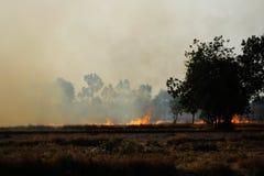 Hierba seca ardiente en el campo Imagen de archivo libre de regalías