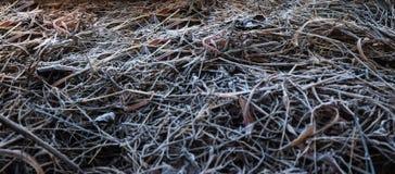 Hierba seca Backgorund Fotos de archivo libres de regalías