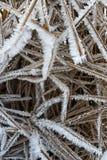 Hierba seca bajo el hielo Foto de archivo libre de regalías