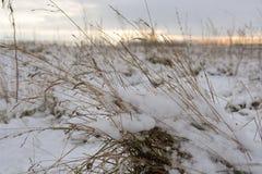 Hierba seca bajo nieve Fotografía de archivo libre de regalías