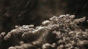 Hierba seca bajo nieve almacen de video