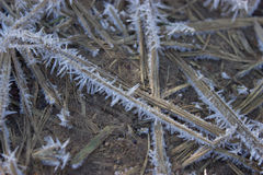 Hierba seca congelada Fotografía de archivo libre de regalías