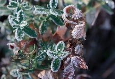 Hierba seca congelada, hoja Imagenes de archivo