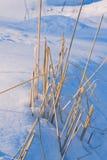 Hierba seca de debajo la nieve Fotos de archivo