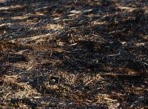 Hierba seca del incendio provocado Fotos de archivo