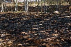 Hierba seca del incendio provocado, bosque Fotografía de archivo libre de regalías