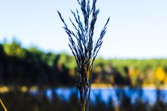 Hierba seca del otoño cerca del lago imagen de archivo libre de regalías