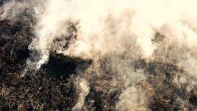 Hierba seca el arder negro con humo en madera metrajes