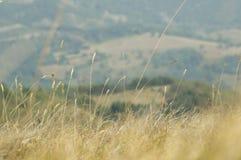 Hierba seca en campo Fotos de archivo