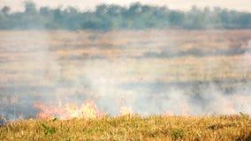 Hierba seca en el fuego almacen de metraje de vídeo