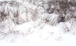 Hierba seca en el invierno fotos de archivo